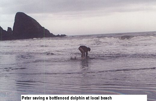 Bottlenosed dolphin got stranded.