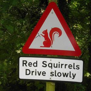 Cars slow to watch for squirrels. NOT for children !!