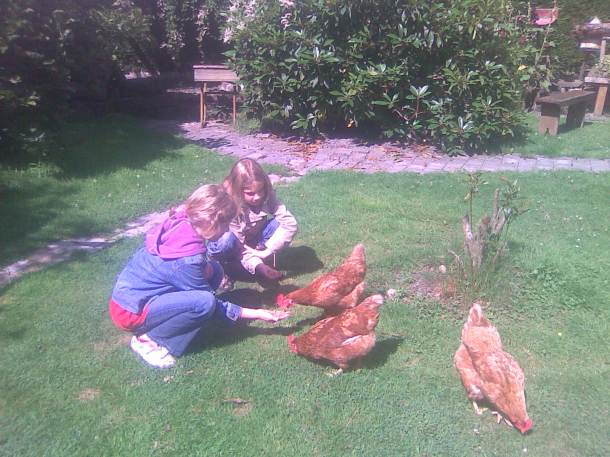 The girls get to feed the hens.